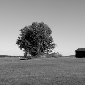 Tree & Shed